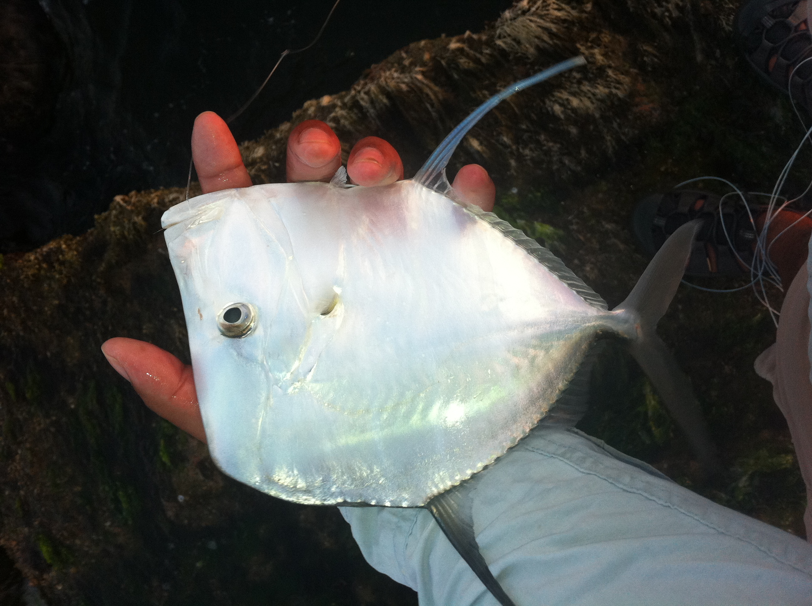 An unusual catch with unusual friends don alcala fly for Corpus christi fishing spots