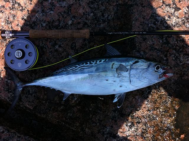 Don Alcala Bonito Corpus Christi Fly Fishing