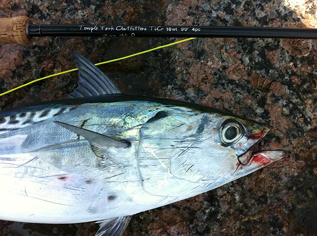 Don Alcala Bonito Port Aransas Fly Fishing